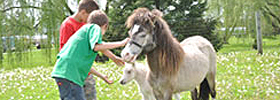 lil-country-store-mini-horse-farm